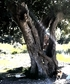 March 2020 Hugging an old tree