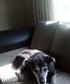 Doggy36