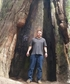 California Redwoods in the year 2017