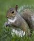 CraftySquirrel