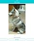 My lovely dog ZALA