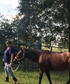 My horse Bella