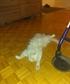 My cat Pogo