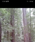 Avenue of the Giants California I was humbled to be in there shadow