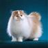 10 BEAUTIFUL CAT BREED