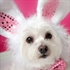 Top Ten Dog Breeds for First Time Dog Owners